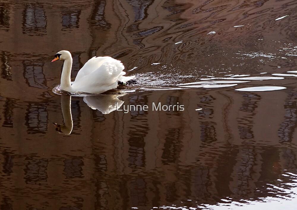 Cutting Reflections by Lynne Morris