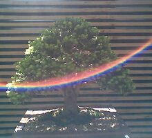 Bonsai with rainbow by Rowena Evans