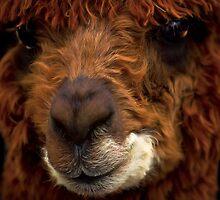 Alpaca by Cheri  McEachin