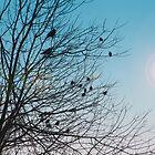 Blue Skies!! by elisab