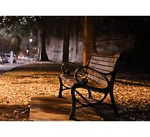 Bench by the road  Photographic Print