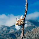 Crosswind by Delfino