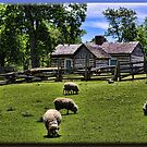 Sheep in the Meadow by Sheryl Gerhard