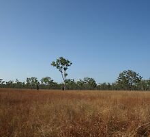 Iron Range National Park - North QLD by DanielRyan