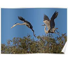 Feuding Herons Poster