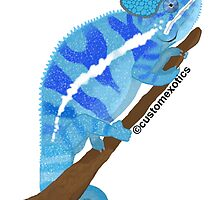 Blue Panther Chameleon Art by CustomExotics