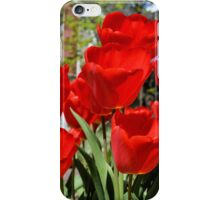 Front Yard Tulips iPhone Case/Skin