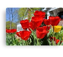 Front Yard Tulips Canvas Print