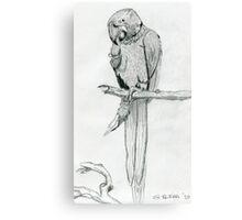 A Playful Parrot Canvas Print