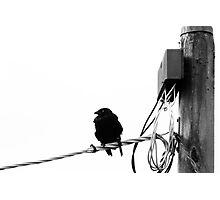 Tweet Photographic Print
