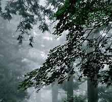 Through the Mist by Valerie Rosen