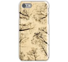 Birch Forest Canopy, Sweden iPhone Case/Skin