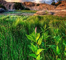 Tall Grass, One Pink by Bob Larson