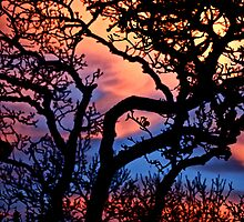 Sunset in San Anselmo  by ronda chatelle