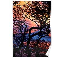 Sunset in San Anselmo  Poster