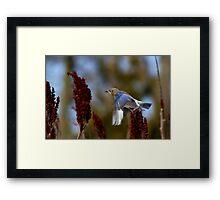 What's The Rush - Eastern Blue Bird Framed Print