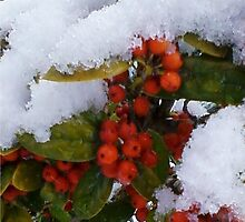 Snowberries ~ City of Champions, Gadsden, AL by ArtistJD