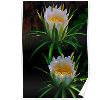 Queen of the Night ~ Deer-Horn Cactus Poster