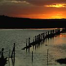 Wet Lands,Portarligton,Bellarine Peninsula by Joe Mortelliti