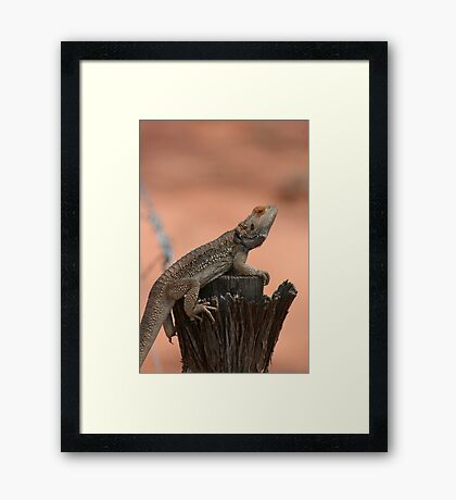 Perched dragon Framed Print