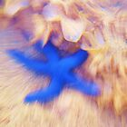 Starfish on the run by Tisa