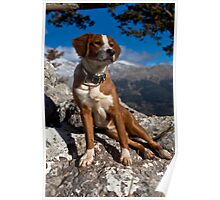 Top of the world dog Poster