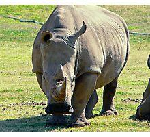Rhino at Werribee Zoo Australia Photographic Print
