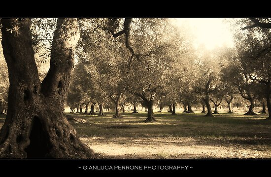 Uliveto Salentino by Gianluca Perrone