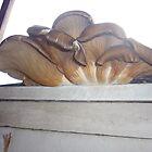 Fungi 2 by Matt Roberts
