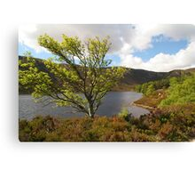 Loch Muick in Spring time Canvas Print