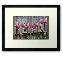Spring Tulips and Lace Framed Print