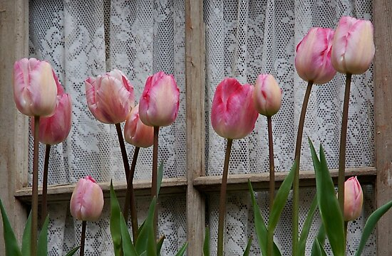 Spring Tulips and Lace by Marjorie Wallace