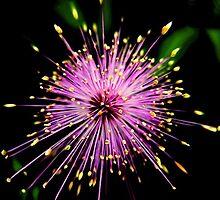 Pink Fireworks by Savannah Gibbs