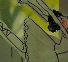 Ballerina - concentrated by Nathalie van Bergen