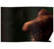 Orangutan light Poster