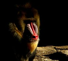 Primate Portraits ~ Part Two by artisandelimage