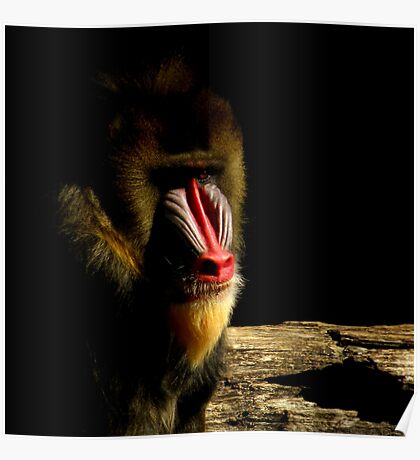 Primate Portraits ~ Part Two Poster