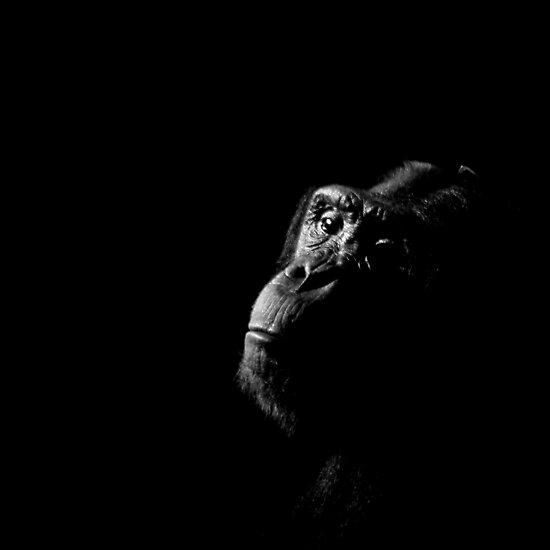 Primate Portraits ~ Part Three by artisandelimage
