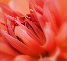 Vibrant  by Laurie Minor
