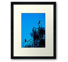 Cormorant Silhouettes Framed Print