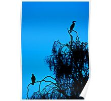 Cormorant Silhouettes Poster