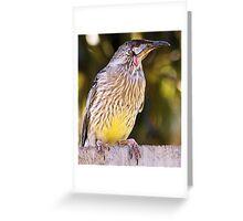 Wattle Bird 2 Greeting Card
