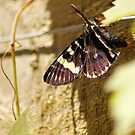Butterfly Vine by Rhonda F.  Taylor