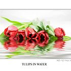 Tulips in water by vitocork