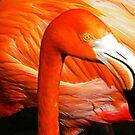Flamingo Closeup by gcampbell