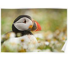 Atlantic puffin profile Poster