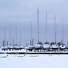 Winter rest by Bluesrose