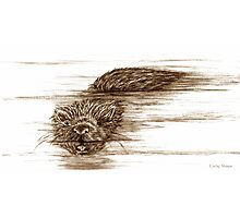 A Little Otter! Photographic Print