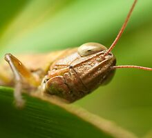 Grasshopper alien? by tara-leigh