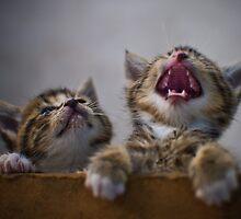 Cute Kittens by XLR8